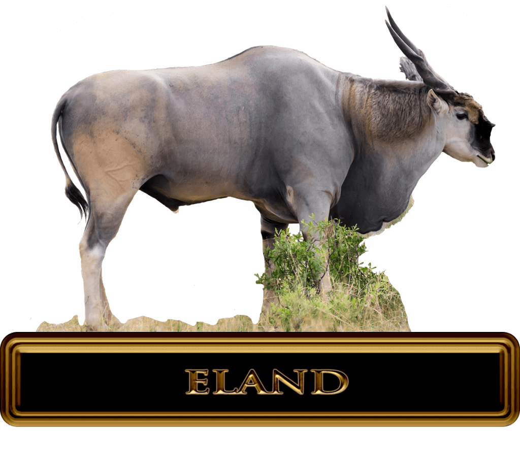 Large Eland standing in Africa Country side.