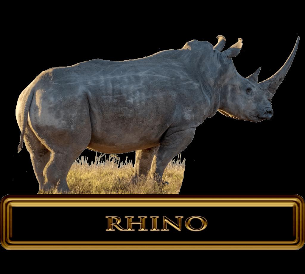 Giant-Africa-Rhino