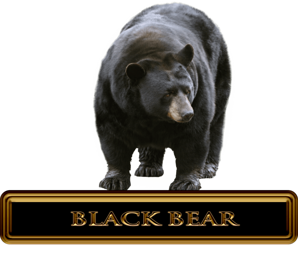 Black bear Hunts & Outfitters