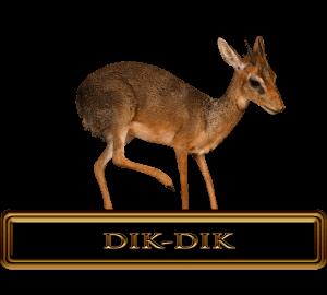 Trophy Dik-dik Hunt in Africa.