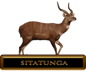 Best Sitatunga Hunts in Africa